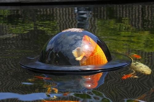 Budget Fish Dome