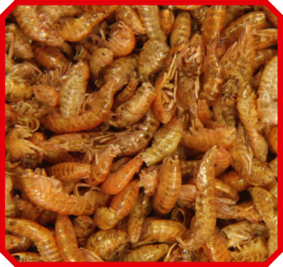 Vivani Fishfood - Gammarus 2,5 liter